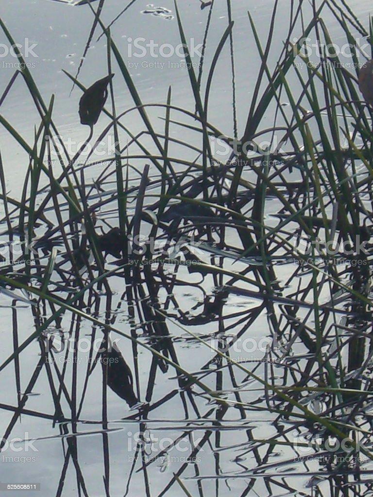 Lake Grass Weavings stock photo