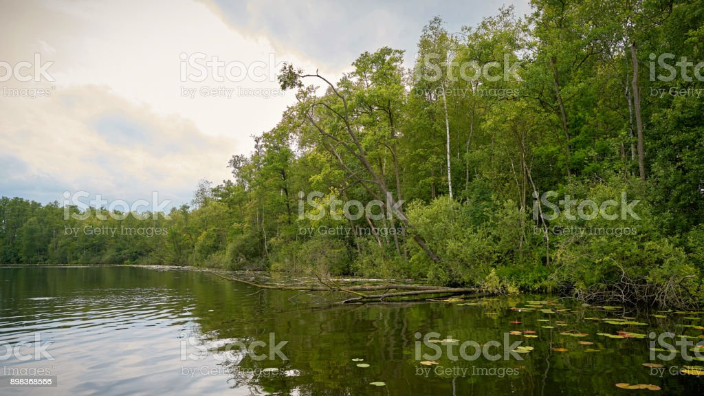 Lake in a nature reserve in the Mueritz National Park stock photo