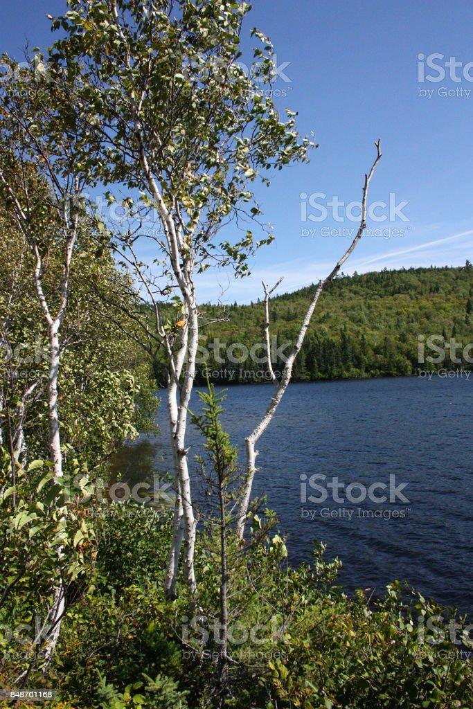 Lake in Canada stock photo