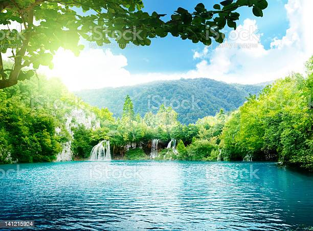 Photo of lake in deep forest