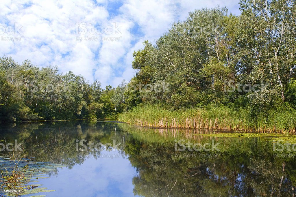 Lake in forest royalty-free stock photo