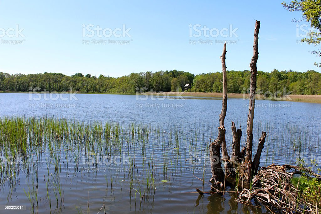 Lake in Limbazi town, Latvia royalty-free stock photo