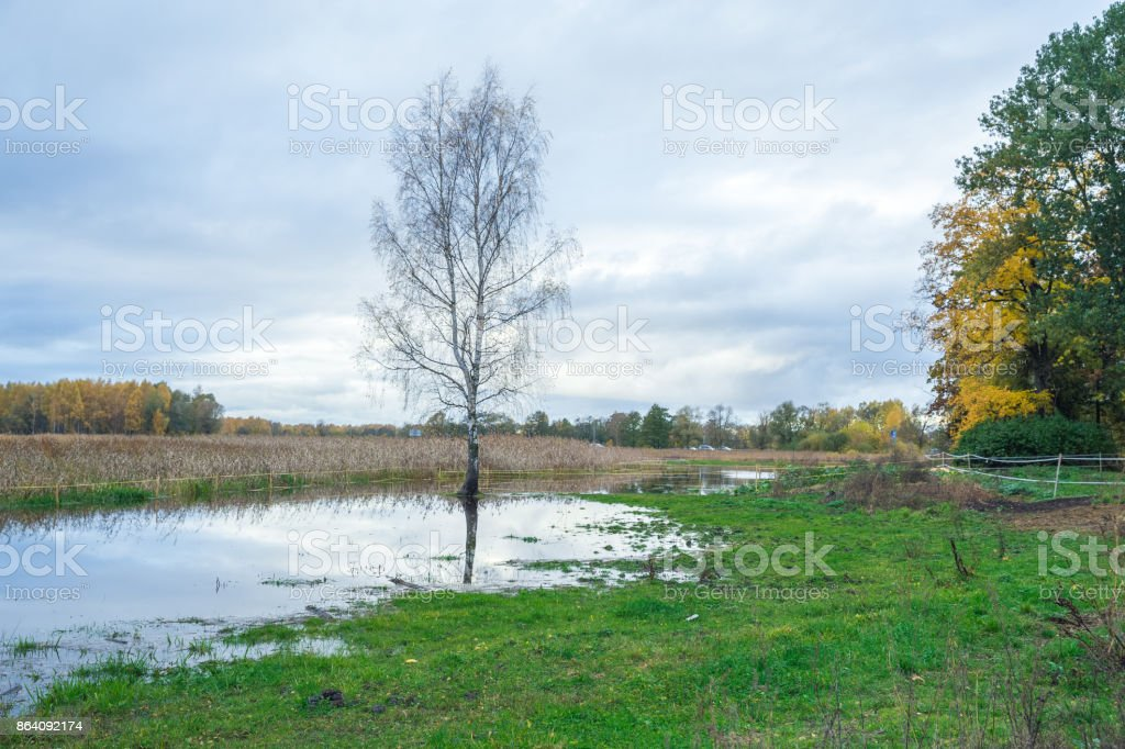 Lake in Riga, district Jugla. Autumn, yellow tree leaves, lake and reflection. 2017 royalty-free stock photo