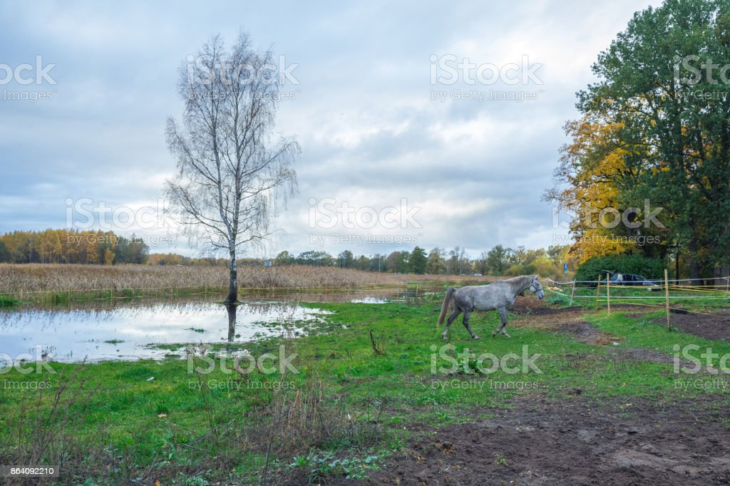 Lake in Riga, district Jugla. Autumn, yellow tree leaves, lake, horse and reflection. 2017 royalty-free stock photo