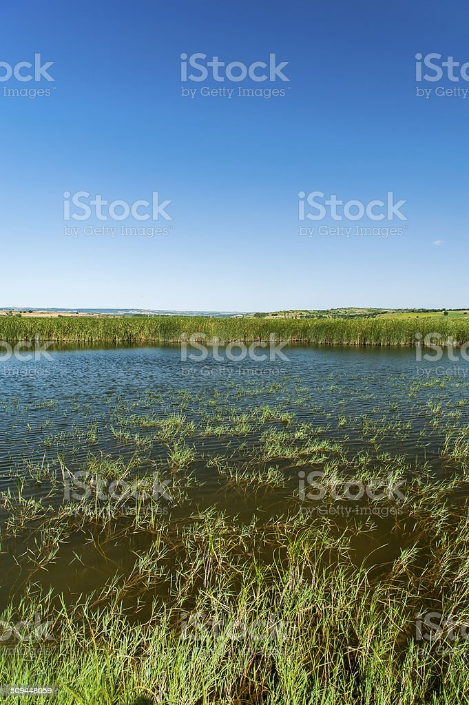 lake in summer stock photo