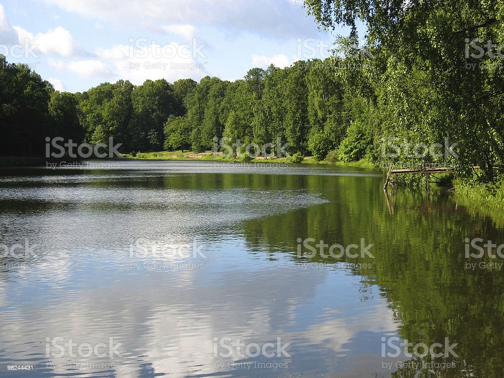 Lake in summer royalty-free stock photo