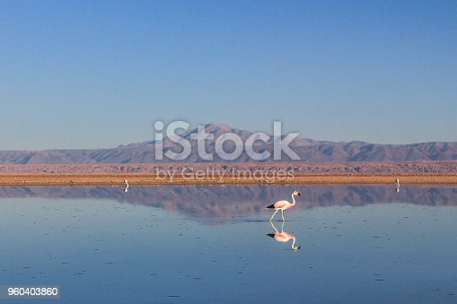 Lake in the reserve of the Flamingo, Atacama, in a beautiful evening.