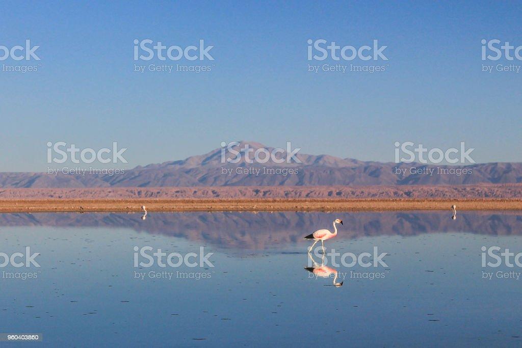 Lake in the Atacama desert, Chile, with flamingos. stock photo