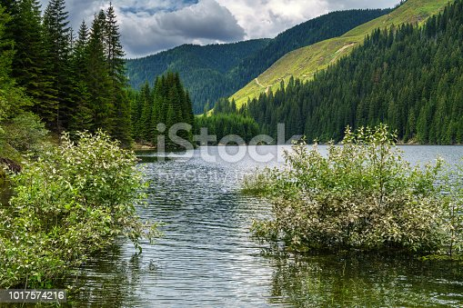 Summer landscape with a beautiful lake between mountains covered in pine forests