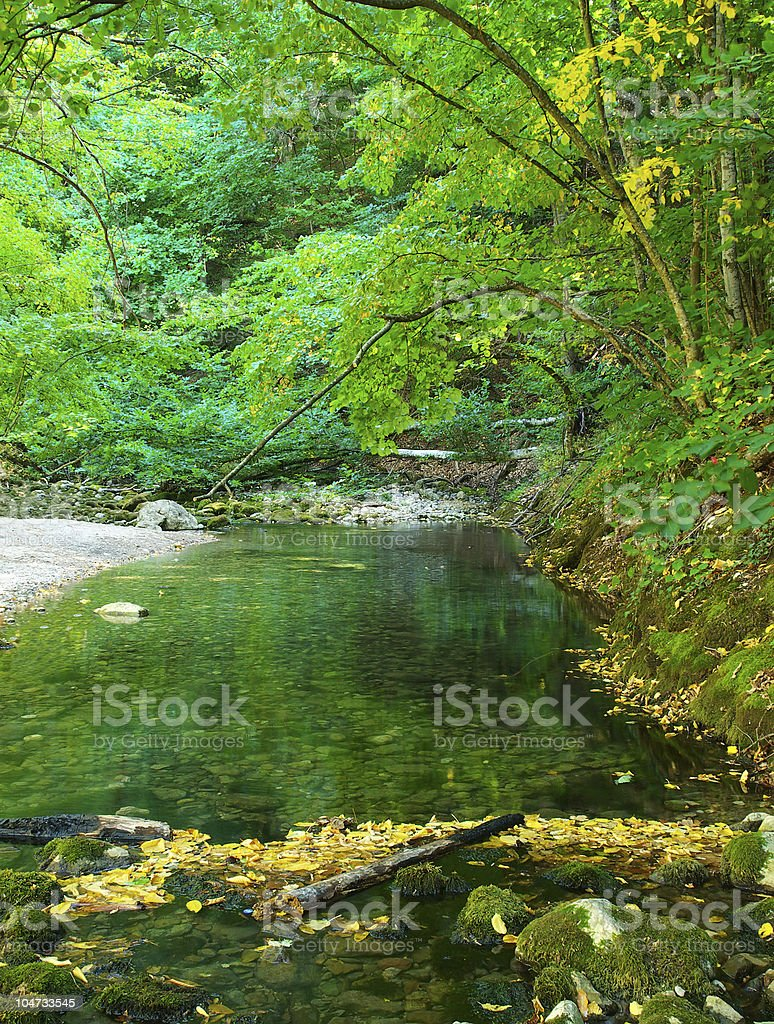 lake in the wood royalty-free stock photo