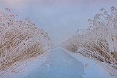 lake in winter. Location: Comana Natural Park, Romania.