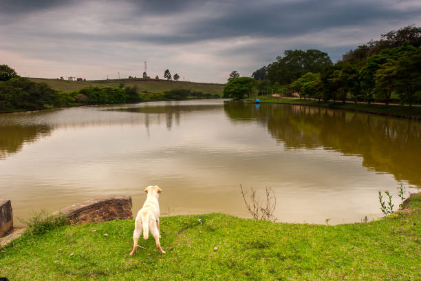 Lake inside a farm with a dog looking stock photo