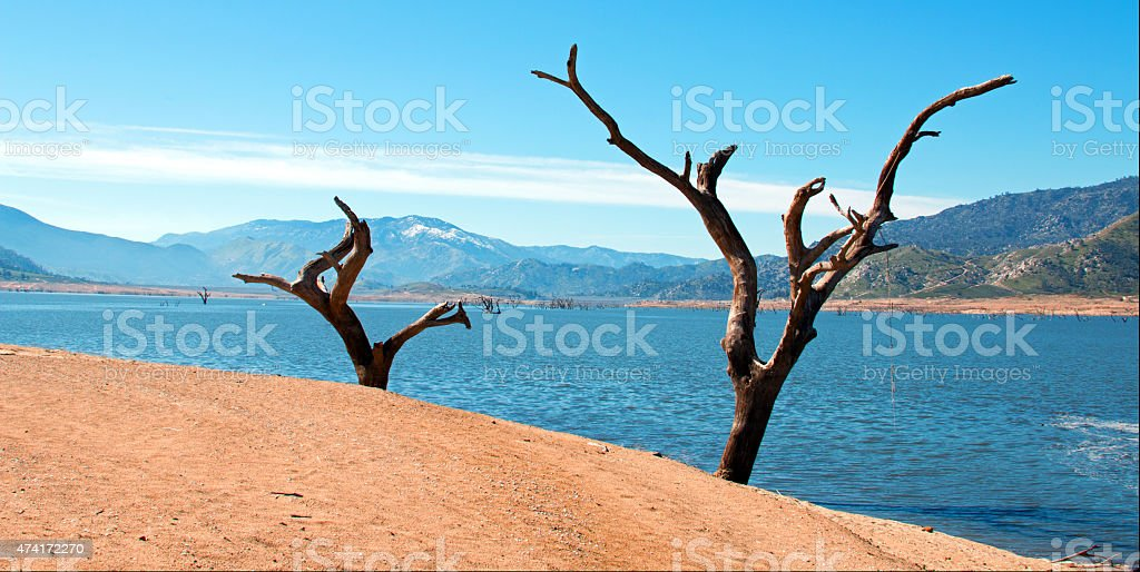 Lake Isabella Kern River Dead Trees on the shore stock photo