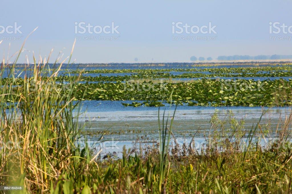 Lake Kissimmee vegetación del pantano y agua de Florida central. foto de stock libre de derechos