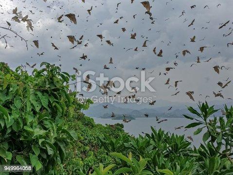 Lake Kivu, Rwanda (africa)