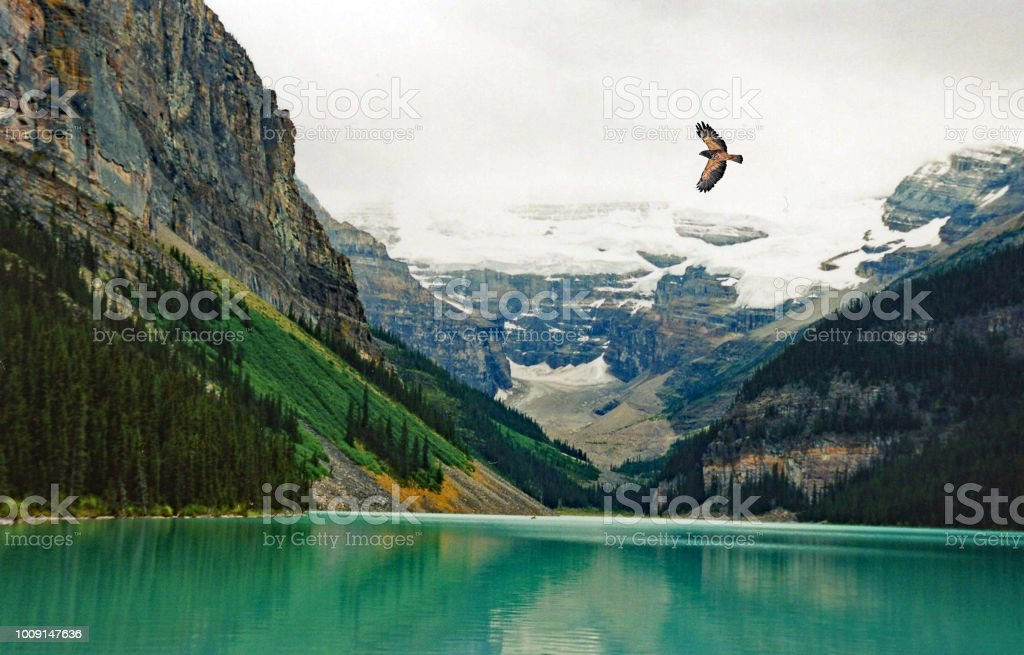 Lake Louse summer with hawk flying over lake stock photo