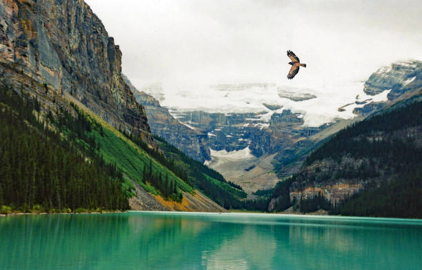 lake louse summer with hawk flying over lake - hawk bird stock photos and pictures