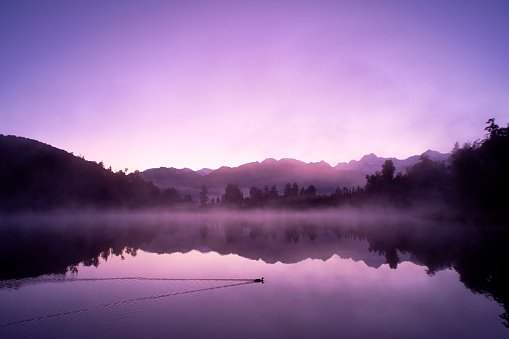Dawn on New Zealand's South Island, and a duck glides across the mirror-like surface of Lake Matheson.