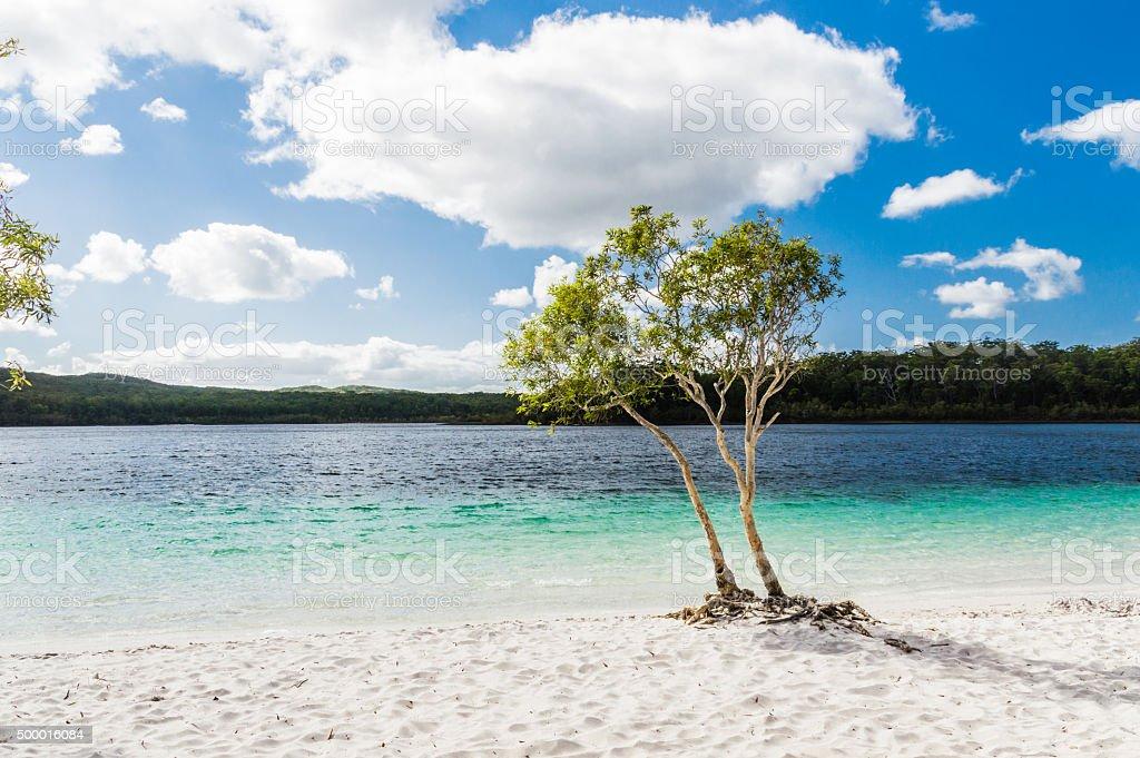 Lake McKenzie Beuatiful pure Lake McKenzie, Fraser Island, Australia 2015 Stock Photo