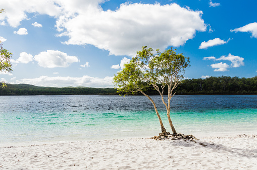 Lake Mckenzie Stock Photo - Download Image Now