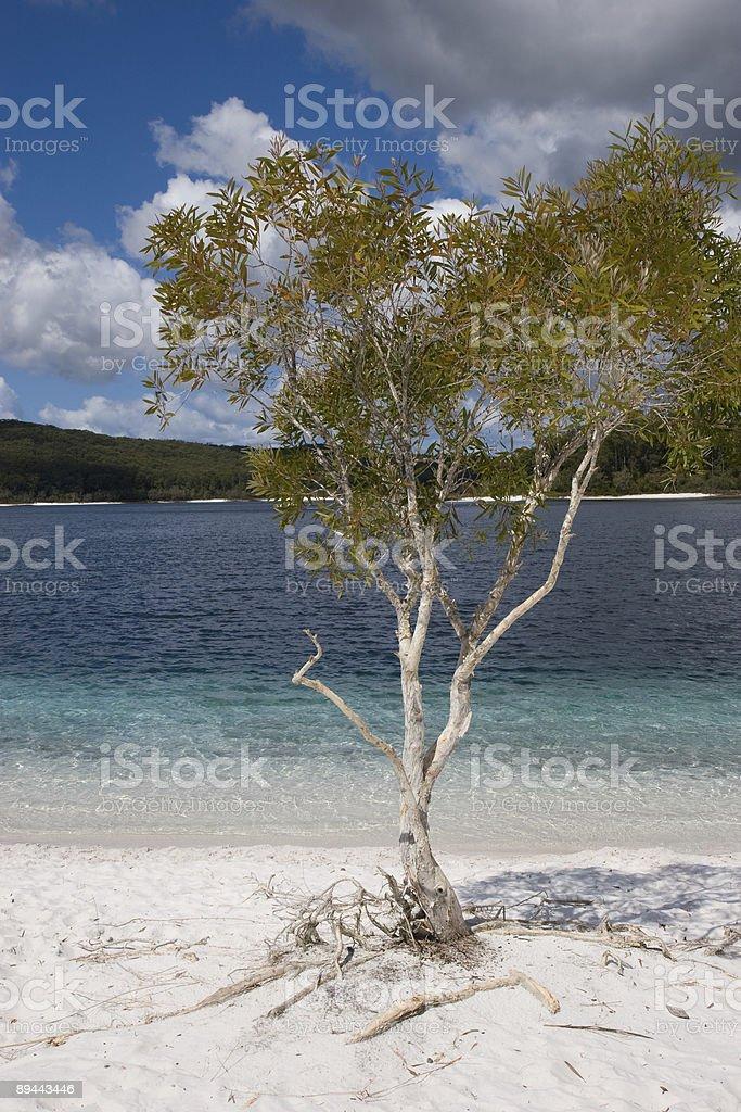 Lake McKenzie royalty-free stock photo