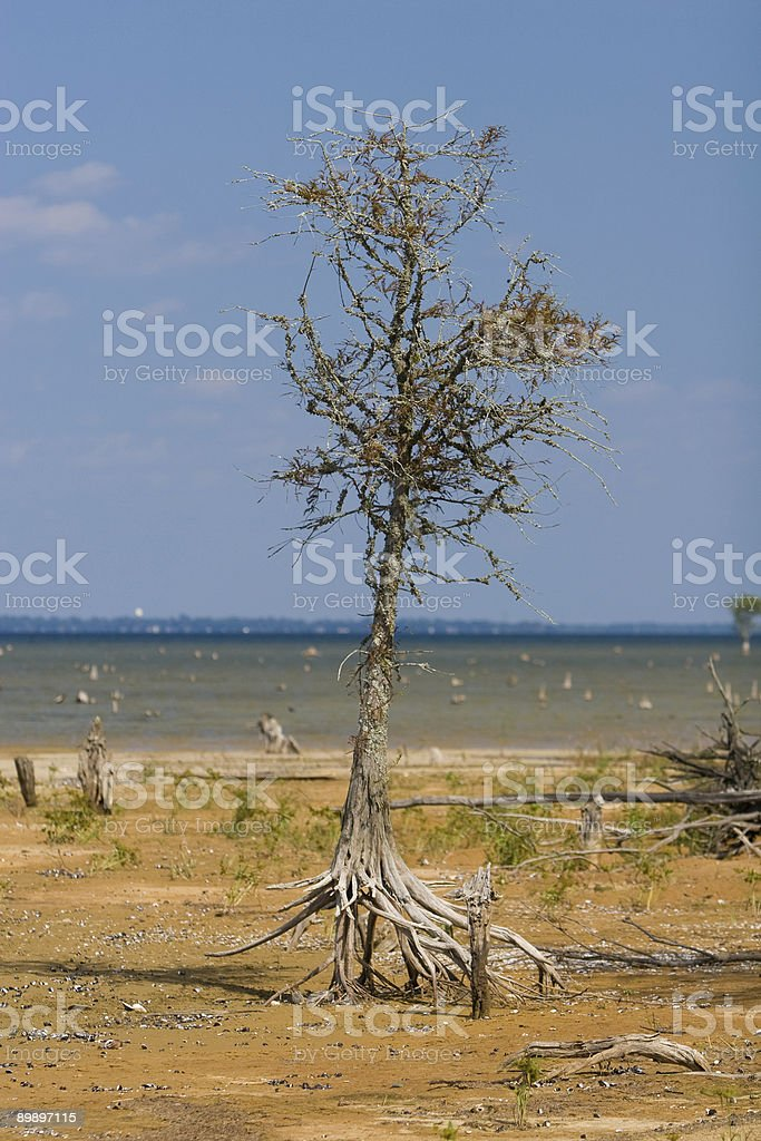 Lago Moultrie foto stock royalty-free