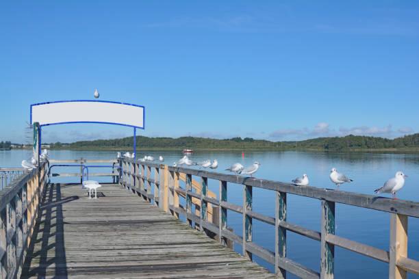 lake mueritz,mueritz national park,germany - nationalpark müritz stock-fotos und bilder