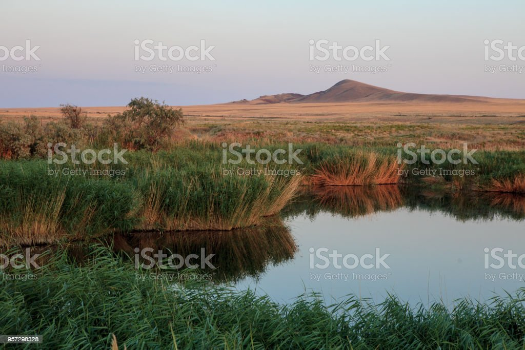 Lake oasis. The reeds and grasslands landscape stock photo