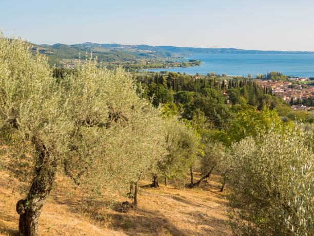 Lake of Bolsena, Italy stock photo