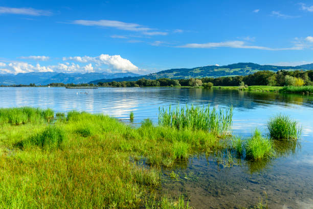 lake of constance Beautiful coast at the lake of constance with grass and reed in the foreground and mountains in the background. coastal feature stock pictures, royalty-free photos & images