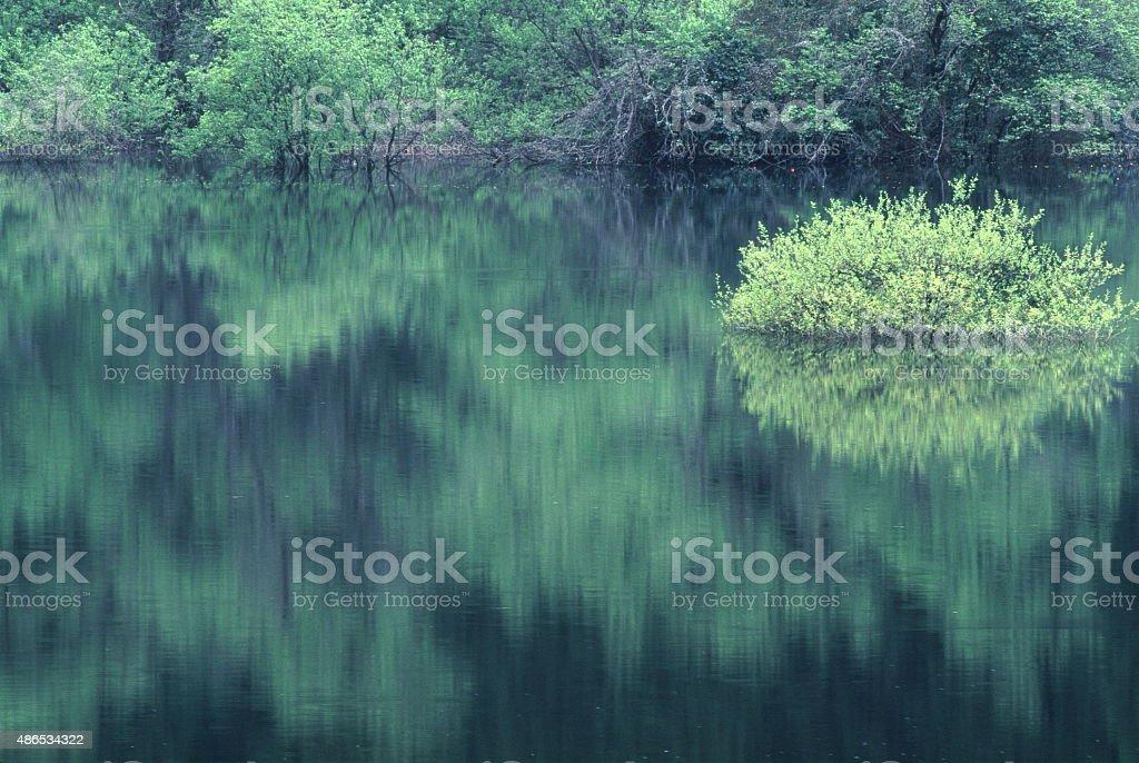 新鮮なグリーンの湖 ストックフォト