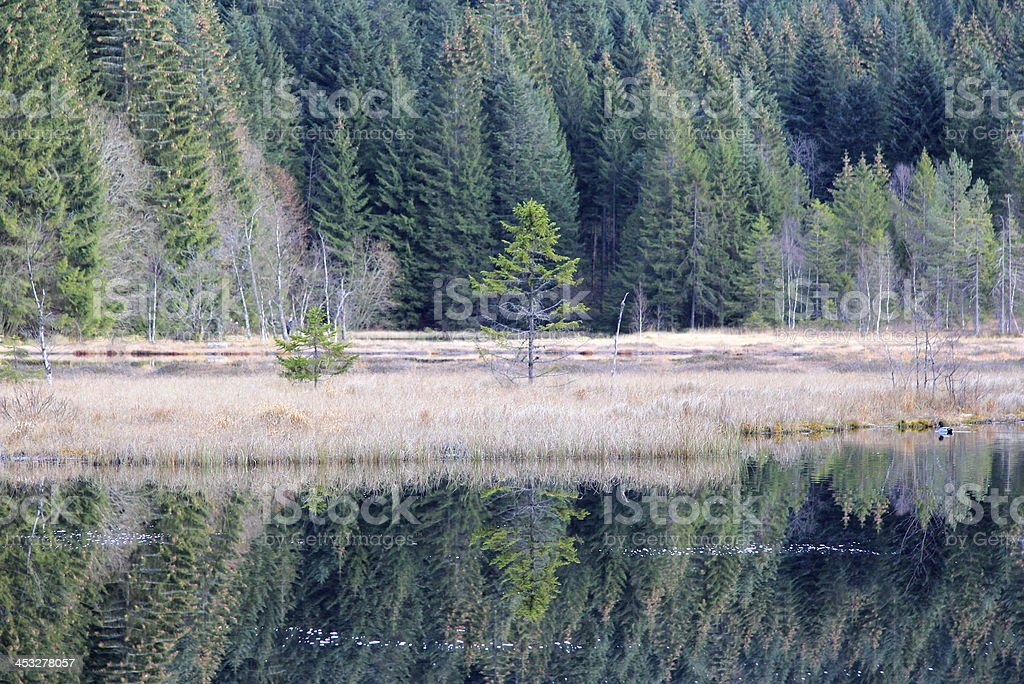 Lake of Lispach in Vosges stock photo