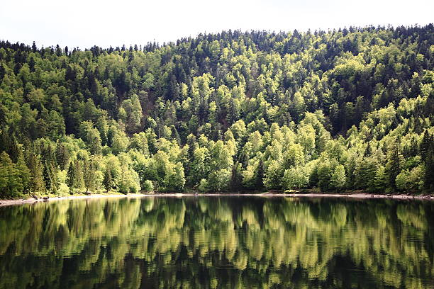 Lake of Ravens in the Vosges Landscapes of the Vosges, France grand est stock pictures, royalty-free photos & images