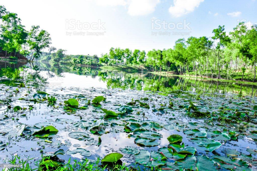 Lake of water within tea garden. stock photo