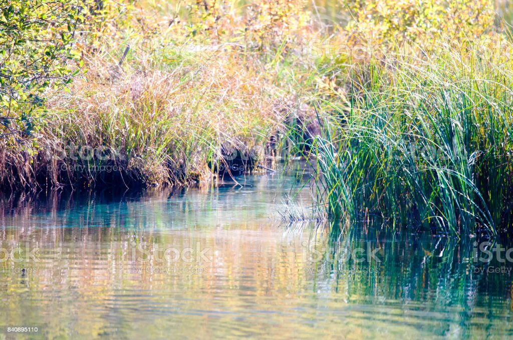 See Offshore-vegetation – Foto