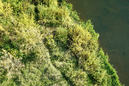 lake or river bank covered with grass and bushes