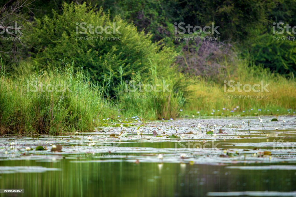 Lake Panic royalty-free stock photo