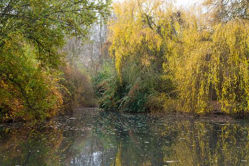 Lake Park in Autumn - Lago de Parque  en Otoño