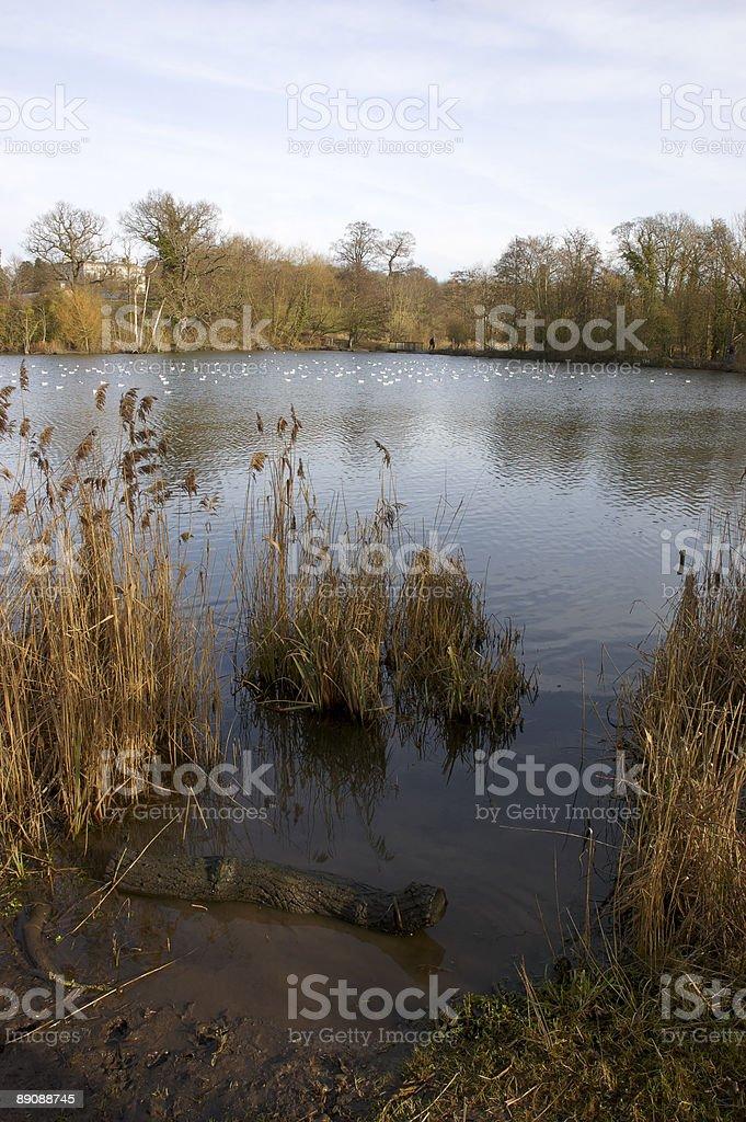 Lake 免版稅 stock photo