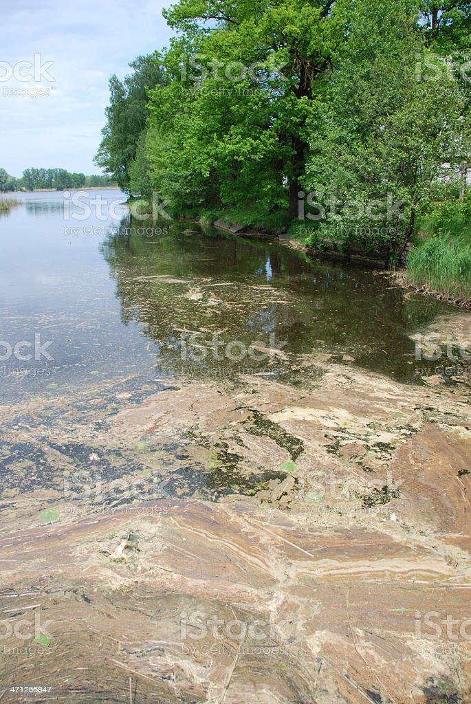 Lake Pollution royalty-free stock photo