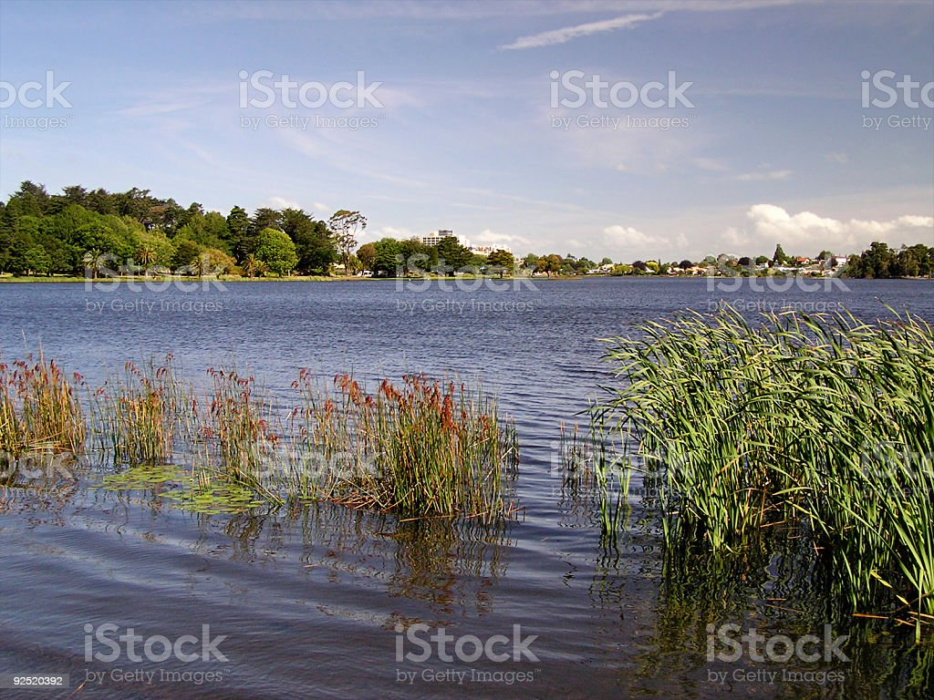 Lake reeds with distant city royalty-free stock photo