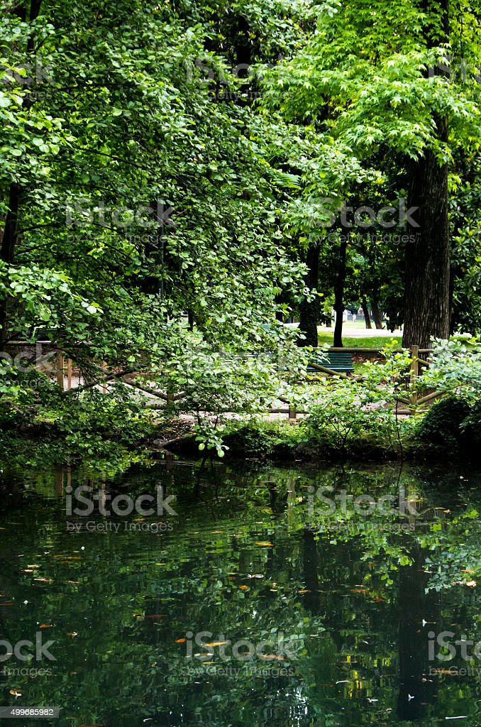 Lake reflection in a park stock photo