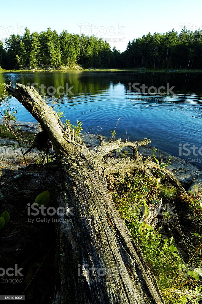 Lake Ripples royalty-free stock photo