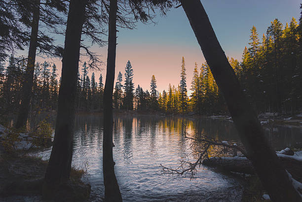 lake rises - pinaceae stock photos and pictures