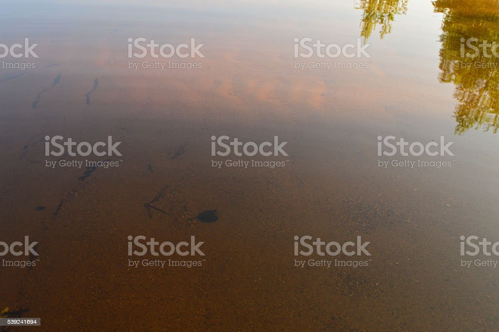 Lake sandy beach in the light of the morning sun royalty-free stock photo