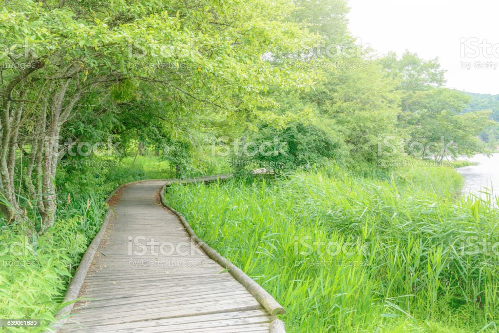 Lake shore hiking course. stock photo