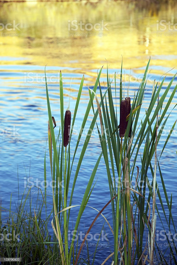 Lake Shore Plants royalty-free stock photo