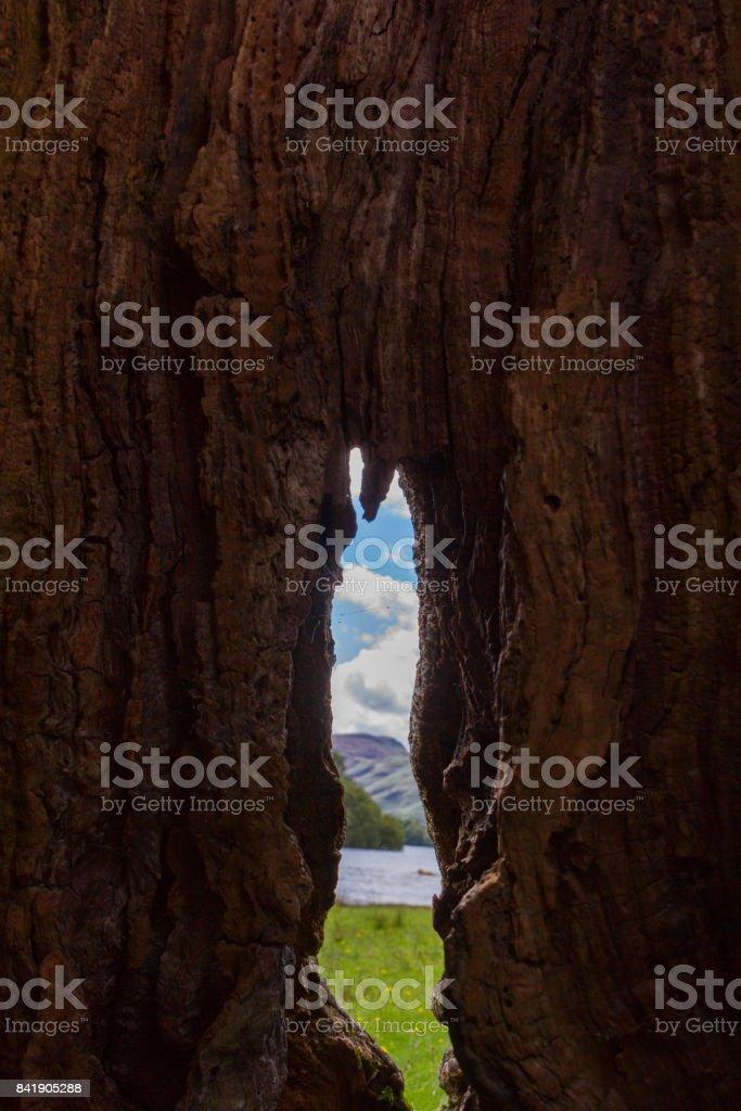 Lake shore view through a hollow tree trunk, Keswick, UK stock photo