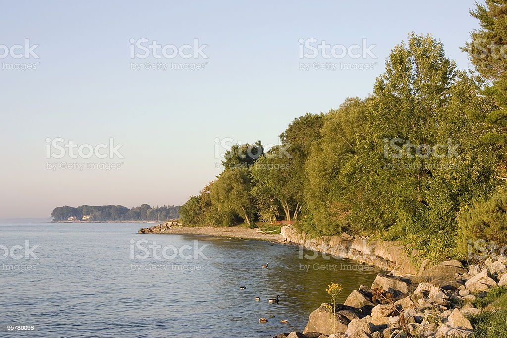 Lake shore with trees stock photo
