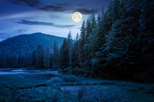 lake summer landscape at night